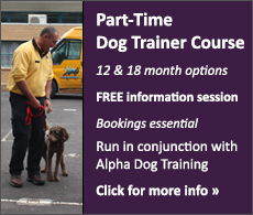 Part-Time Dog Trainer's Course